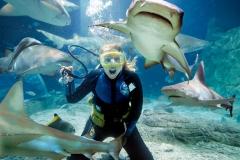 Underwater World Sunshine Coast